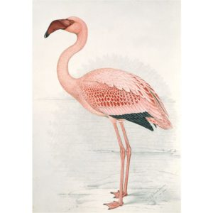 IXXI Flamingo Finch wanddecoratie
